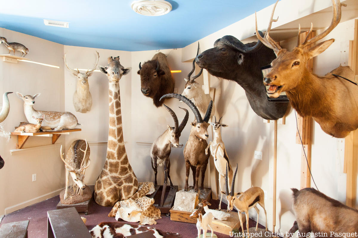 Inside Torah Animal World, NYC's Museum Filled with Taxidermy Creatures
