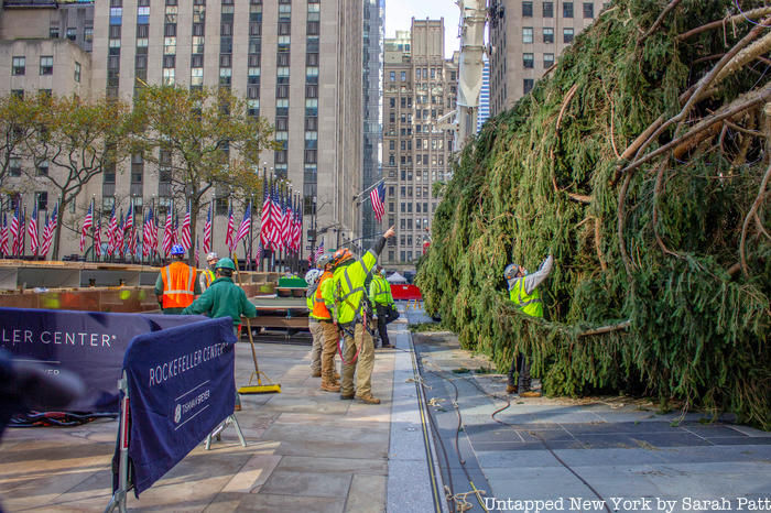 The tree arrives at Rockefeller Center